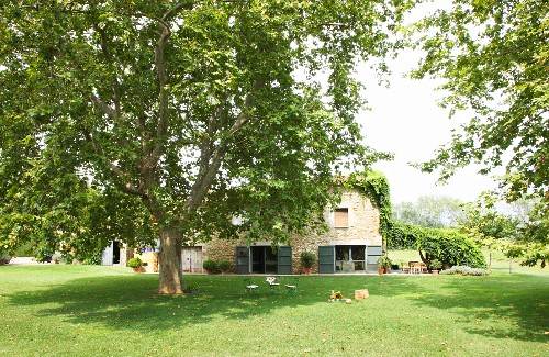 Mature tree surrounded by lawns in front of stone country house