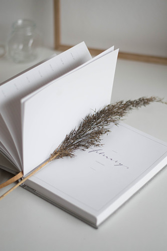 Dried stem of grass in notebook