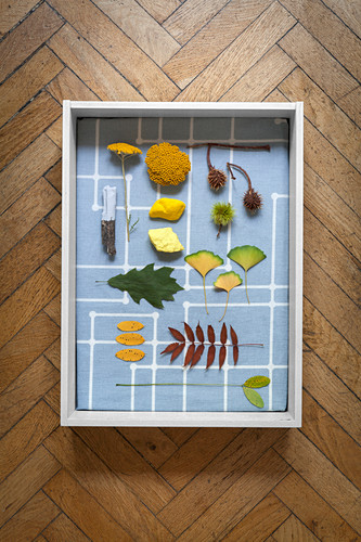 Collection of plants and leaves in fabric-lined display case
