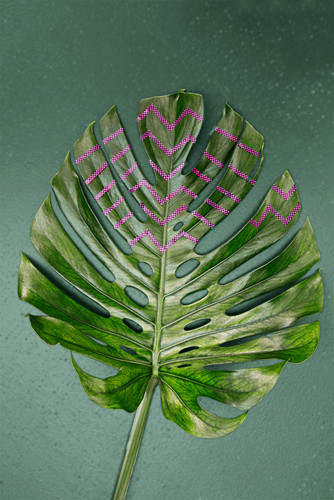 Swiss cheese plant leaf decorated with pink washi tape
