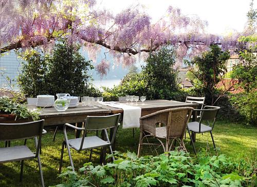 Crockery on tables in garden below pink-flowering wisteria