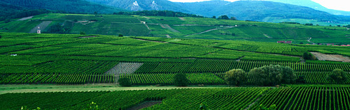 Green countryside in wine-growing region in Alsace (France)