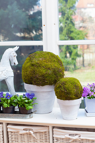 Handmade moss balls in front of window