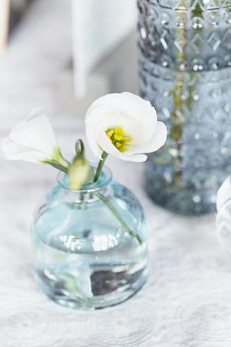 Prairie gentians in glass vase