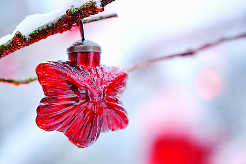 Red, star-shaped Christmas-tree decoration hung from snowy twig