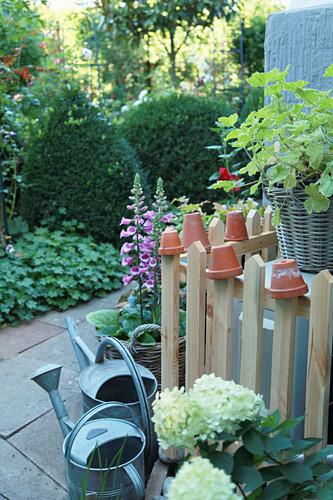 Fingerhut und Strauch-Hortensie am Zaun mit Tontöpfen