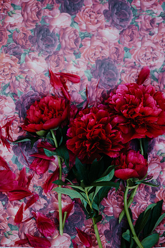 Red peonies on floral background