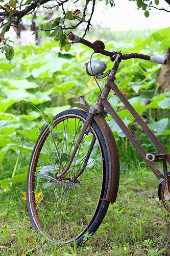 Old, rusty, lady's bicycle in garden
