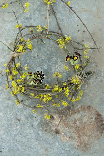 Wreath of primula 'Victoriana Gold Lace' and cornelian cherry blossom