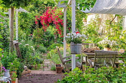 Flowering roses on arch and seating in garden