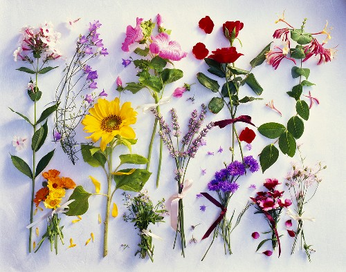 Various summer flowers, clearly arranged