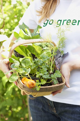 A woman holding a basket of various young plants