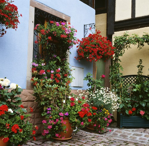 Interior courtyard with hanging baskets and container plants