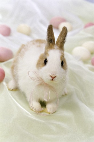 A rabbit with Easter eggs