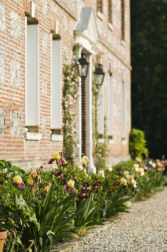 Blooming roses in a bed in front of the brick facade of a country home