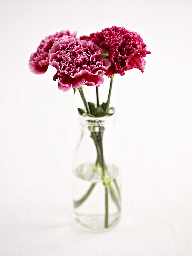 Red carnations in a vase