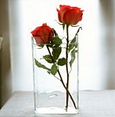 Zwei rote Rosen in einer Glasvase