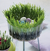 Container with Easter grass and eggs