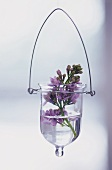 Purple lilac in hanging vase