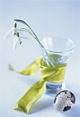 Glass with green bow and snowdrops, quail's egg in front