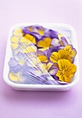 Pansies in polystyrene container