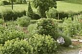 View into a garden with various medicinal plants