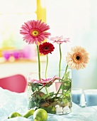 Gerberas, upright and floating in a glass container