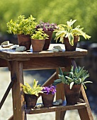 Various herbs in pots on a flower staircase