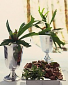Staghorn fern in silver goblet and Fittonias