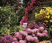 Garden with azaleas, rhododendrons and rose arch