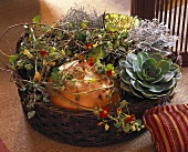 Basket of Sempervivum, Senecio, ornamental cabbage & pumpkin