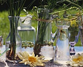 Water plants in decorative glasses and vases