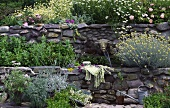 Terraced herb garden with mint, curry plant, chamomile