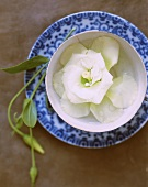 White Lysianthus flower in a small bowl (from above)
