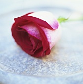 A rose lying in a bowl