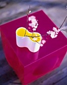 Cherry blossom in a vase standing on a pink cube