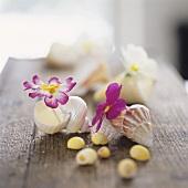 Primroses in empty snail shells