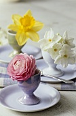A rose, yellow and white narcissi in eggcups