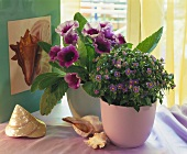 Gloxinia and Persian violet with maritime decoration