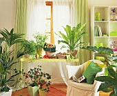 Country-house style room with various foliage plants in front of window