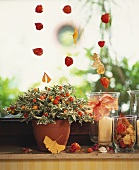 Window with autumn decoration, Jerusalem cherry and physalis