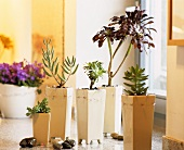 Succulents in decorative plant containers