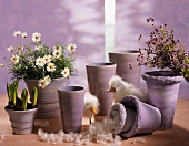 Lilac-coloured cache-pots with marguerites, hyacinths