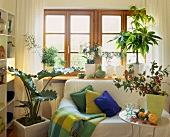 Seating area decorated with ornamental gourds, green houseplants and spindle branches