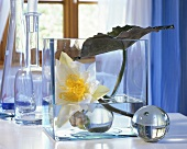 White water lily flower with leaf in glass container