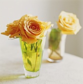 Cream roses in two glasses