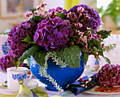 Hydrangea and cabbage leaves in blue flowerpot