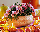 Pink chrysanthemums in pumpkin with heather, apples and leaves