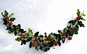 Semi-circle of holly sprigs on white background