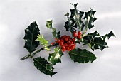 Sprigs of holly on white background